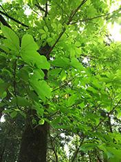 2014年5月(皐月)新緑の季節のとっても簡単な健康法の画像