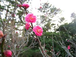 2013年3月(弥生)春のからだは「ひらく」「ゆるむ」「デトックス」の画像