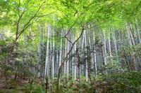 2012年5月(皐月) 風薫る5月、爽やかに眠ろうの画像