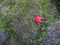 2011年11月(霜月)冬の身体にいいこと試してみよう!の画像
