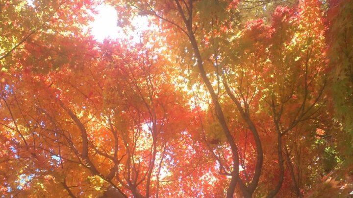 2017年10月(神無月) 秋のリズム♪の整え方の画像